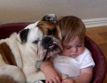 Buldogas ir kūdikis miega viename guolyje