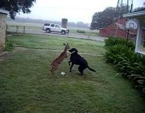 Dog versus Deer