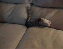 Kaciukas slepiasi neiprastoje vietoje