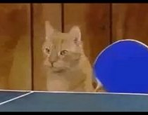 Ping Pong Cats