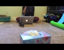 Tiesa apie žiurkes: Žiurkių triukai