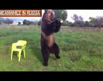 Funny Bear - Only in Russia