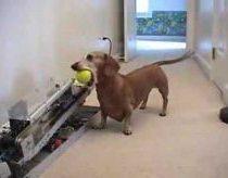 Automatinė kamuoliukų svaidymo mašina šunims
