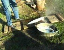 Kaip lengvai nuvalyti žuvį su aukšto slėgio purkštuvu