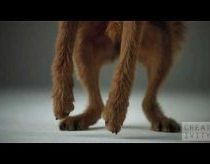 Pedigree Dogs ad shot 1000 FPS using the Phantom camera