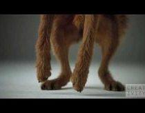 Sulėtinta šuniukų reklama