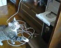 Katinas kovoja prieš DVD grotuvą