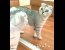 Dramatiškas Katinas