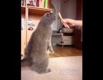 Kačiukas: prašyčiau šukuoti veidą