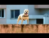 Worlds Most Amazing Dog!!! (parkour)