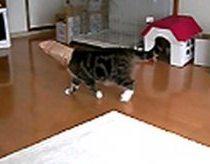 Maru - masked cat