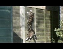 Gravity Defying Cat - The Slow Mo Guys