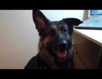 Šuo nesupranta Skype