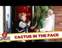 Prank with cactus and oppening doors - hidden camara