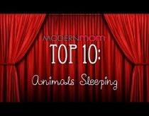 Top 10 - miegantys gyvūnai