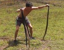 Laukinius triušius gaudo su gyvatėmis!!!