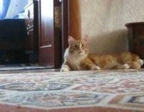 Katinas išejo