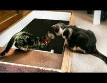 Kaip katės mokina kitas kates lipti laiptais