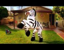 Beveik tikro Zebro šokis