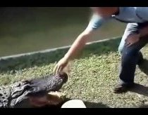 Never tease an alligator!