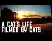 Cat Diaries: The First Ever Movie Filmed by Cats!