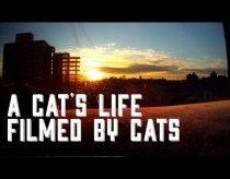 Kačių Dienoraštis: Pirmasis vaizdelis Nufilmuotas pačių Kačių!