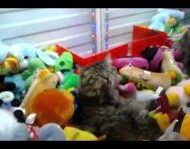 Katinas žaidimų automate