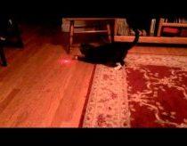 Katinui primontavo lazeriuką ant galvos
