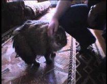 Katinas Kuris Sako NONONONO