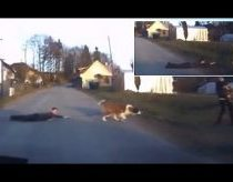St Bernard Dog drags boy across the road nearly gets run over by car new 2015