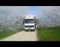 Birds flying out of truck into freedom - awesome !