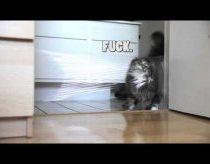 Katino trolinimas su lazeriu