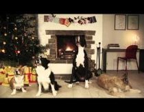 Jingle Barks: Dogs Barking Jingle Bells - Holiday Video