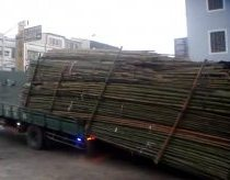 The china truck driver unloaded 3 tons bamboos in 30 sec