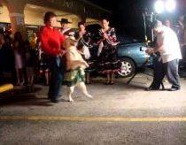 Šuo šokantis salsą