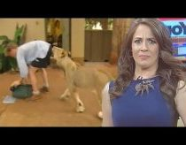 Animals meets news reporters - Best Reporter Animal News Bloopers
