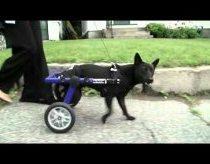 Kiekvienas geras šuo yra puikus šuo - Purina Reklama