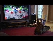 Skateboarding dog plays video game