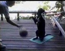 Šuo krepšininkas