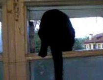 Katinas kuris ir loja ir kniaukia