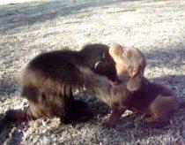 Beždžionėlė žaidžia su šuniuku