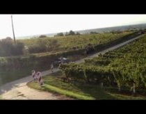 WRC Rallye went to vine fields