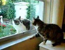 Katės pykstasi per langą