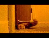 Katinas Žadintuvas
