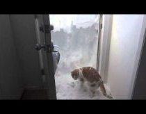 Katinas bando išsikapstyti į lauką per sniegą