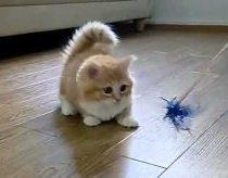Mielas pūkuotas katiniukas