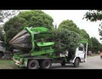 Naujoviškas ir greitas medžių persodinimas