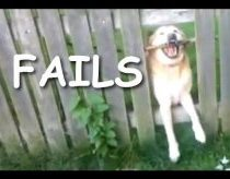 Šunys fizika pagaliai