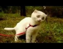 Keista katino reakcija