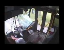 Deer crashes into bus and falls in - Johnstown - Deer Fare